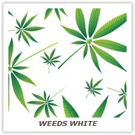 WEEDS WHITE